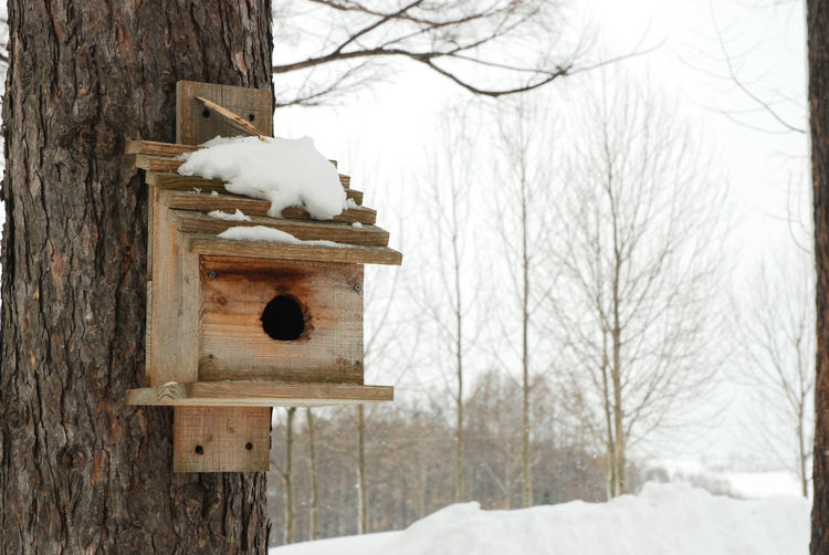#bird House Bare Tree Beauty In Nature Built Structure Cold Temperature Covering Day Landscape Nature No People Non-urban Scene Outdoors Scenics Season  Sky Snow Tranquil Scene Tranquility Tree Tree Trunk Weather White White Color Winter Wood - Material