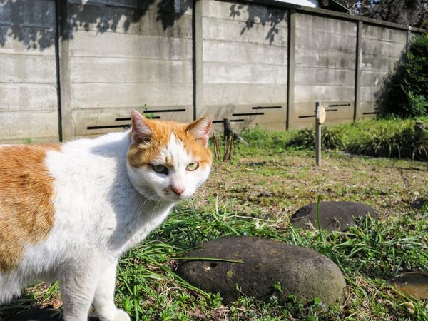 Stray Cat Cat Cat Watching Animals Cat Lovers at Minatoku 芝公園 in Tokyo Japan