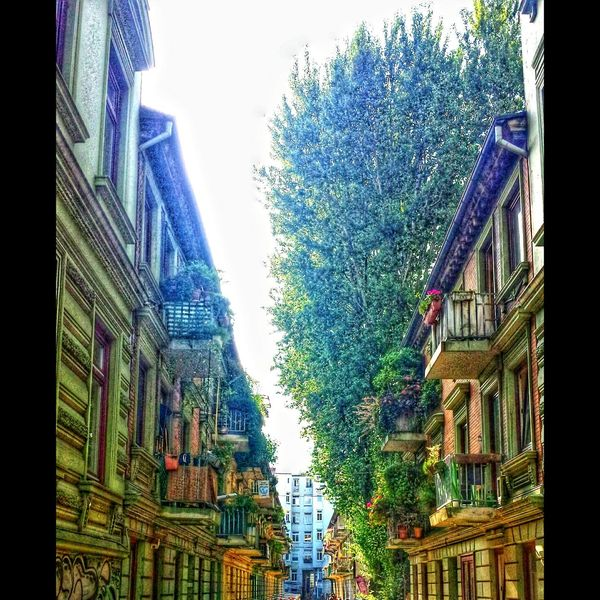 Alley Alleyway Balcony Balcony View Building Buildings Architecture_collection Architecturelovers EyeEm Best Shots EyeEm Best Shots - Architecture HDR Hdr_Collection Hdrphotography Hdr Edit Hdr_lovers Follow4follow Followme Eye4photography  Colorful Colourful Hamburg Hamburgmeineperle Architecture Low Angle View Built Structure Window Building Exterior Tree Close-up City