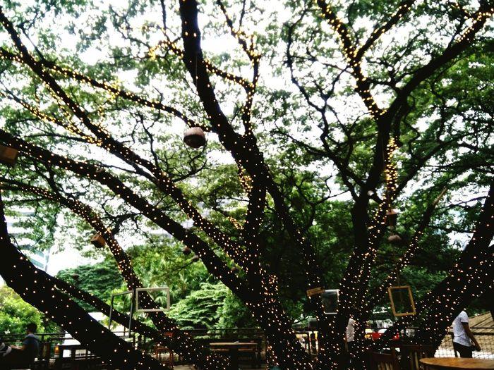 Branch Tree Nature Beauty In Nature Outdoors Shakahawaiianrestaurant