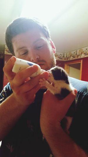Animal Love My World Catslife Bottle Feed Kittens Love For Orphaned Animals