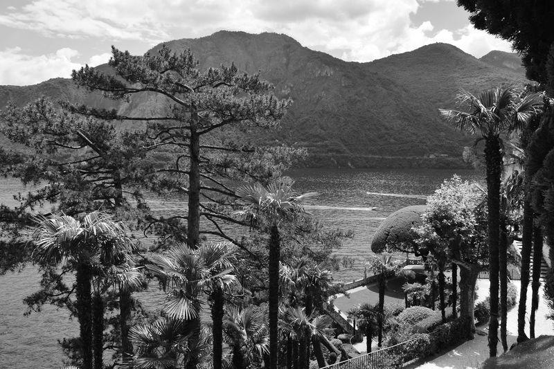 Panoramic shot of trees against mountain range