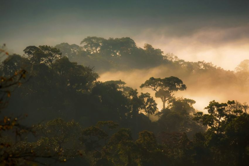 Mist over the mountains in deep forest.( awesome mist ) Travel Photography Open Edit From My Point Of View Urbanphotography Check This Out Nature Outdoor Mist Fog The Best From Holiday POV Market Bestsellers May 2016 Bestsellers