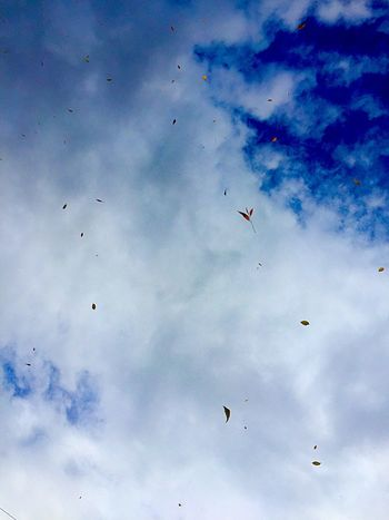 Leaves riding the wind Cloud - Sky Sky Flying Bird Group Of Animals Animal Wildlife Vertebrate