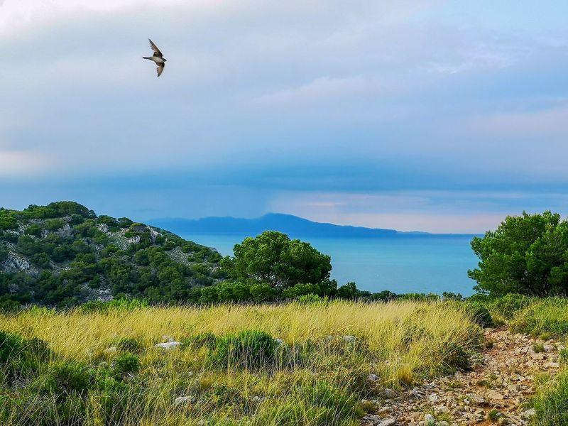 Estartit L'estartit SPAIN Spain♥ Mediterranean  Travel Travel Destinations Nature Swallow Flying Water Sea Blue Mountain Seascape Horizon Over Water