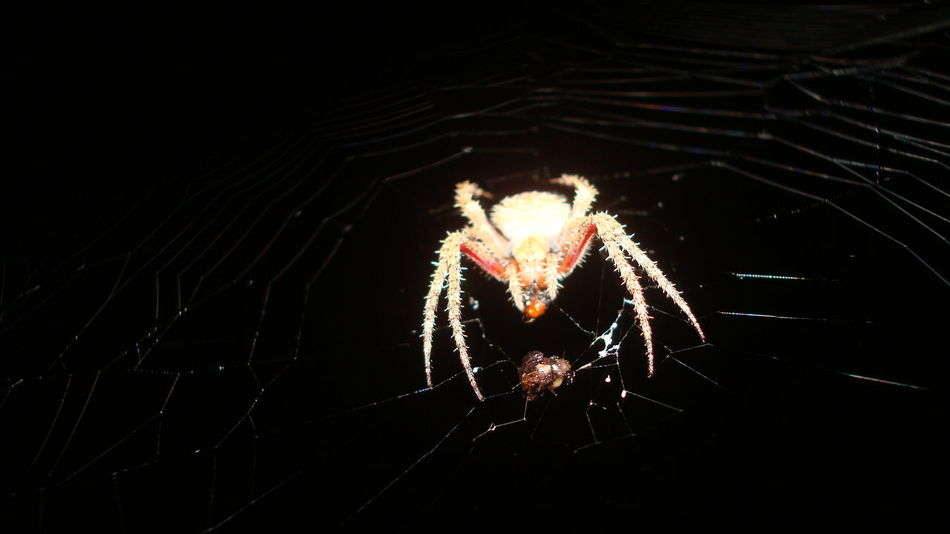 Motion Night Illuminated Sparks Dark Glowing Firework - Man Made Object Exploding Multi Colored Entertainment spider