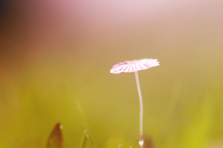 background of grass and mushrooms with bokeh Plant Beauty In Nature Flower Close-up Flowering Plant Vulnerability  Fragility Freshness Growth Pink Color Nature Focus On Foreground Plant Stem No People Petal Selective Focus Inflorescence Flower Head Outdoors Day
