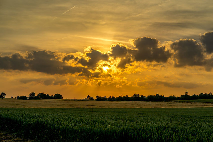 Summer evening. Agriculture Beauty In Nature Cloud - Sky Day Field Growth Idyllic Landscape Nature No People Outdoors Rural Scene Scenics Sky Sunset Tranquil Scene Tranquility