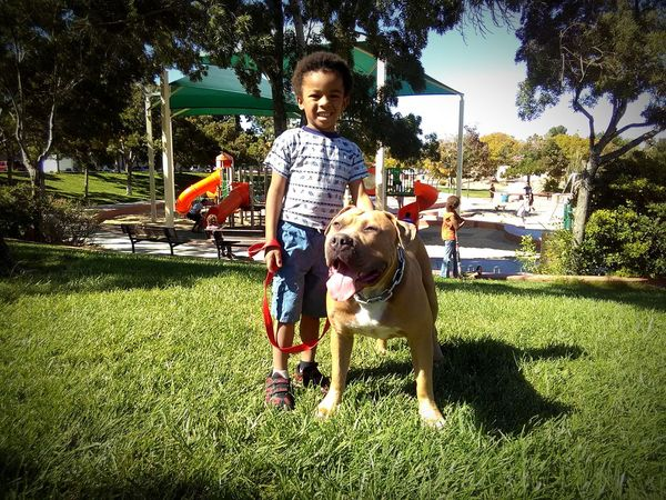 Happiness Playground Child One Animal Domestic Animals Dog Pets Grass Tree Outdoors Day Animal Themes Pitbull Bully Boy And Dog Dog And Baby Walking The Dog Big Dog Dog At Play Children Playing At The Park Boy And His Dog Bestfriend Best Friends Young Animal