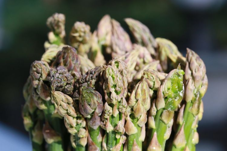 Close-Up Of Asparagus