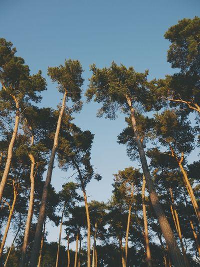 Nature Trees Wanderlust Indiansummer Indian Summer EyeEm Nature Lover The Great Outdoors - 2016 EyeEm Awards