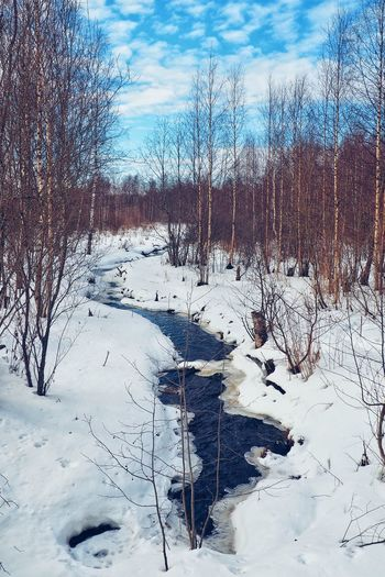 Spring stream Spring Leningradregion Vsevolozhskiydistrict Matoksa Russia Forest Nature Travel Landscape Sky Snow Covered Snowcapped Snow Weather Condition Season  Weather