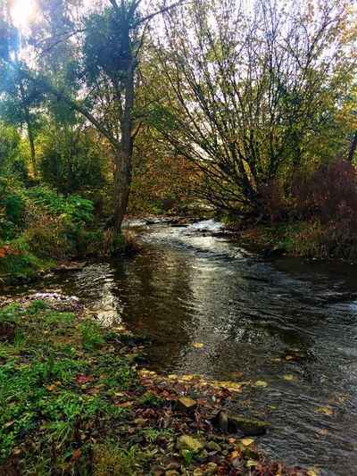 Alme Auen Park in Büren Nature Tree Water Scenics Tranquility Beauty In Nature Outdoors Tranquil Scene Autumn No People Growth Non-urban Scene Change Forest Day Grass Stream - Flowing Water Naturpark Alme Auen