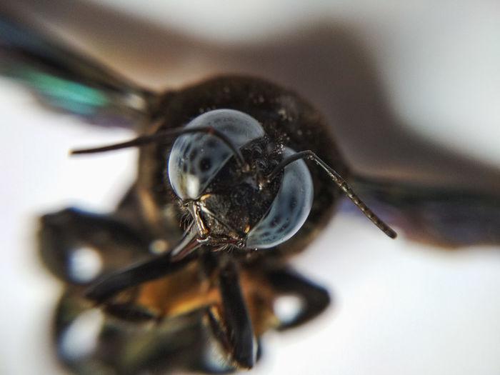 Looking At Camera Eyes Macro Macro Insects Insect Close-up Animal Leg Animal Antenna