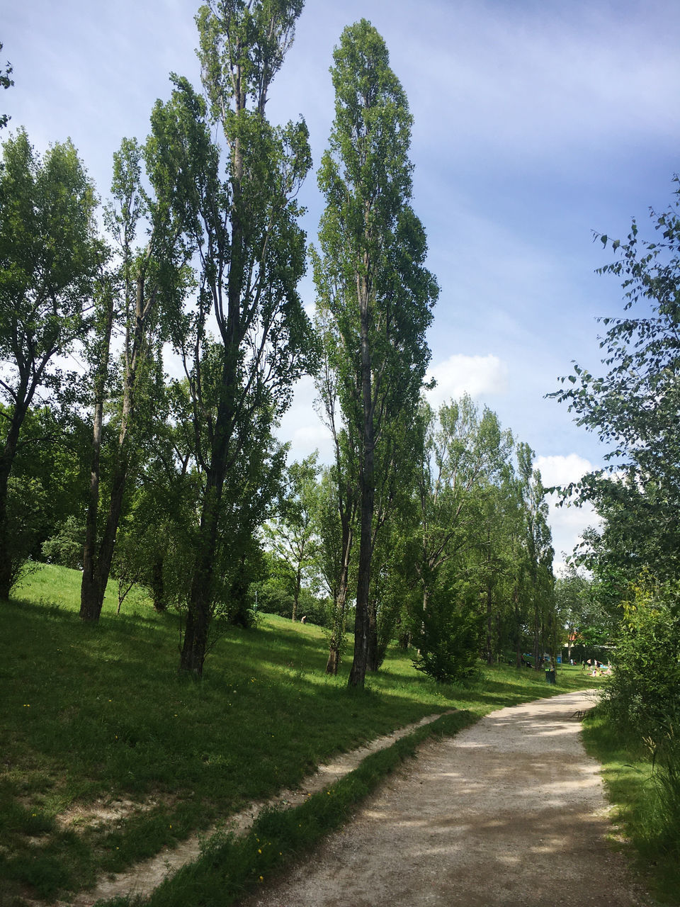 FOOTPATH AMIDST TREES AND PLANTS AGAINST SKY