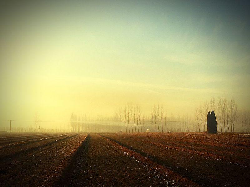 Field By Lemonni