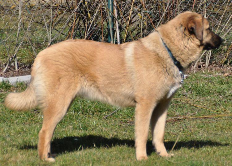 Jackie Animals Dog Dogoftheday Dogs Dogs Of EyeEm Dog❤ One Animal Ptts Side View