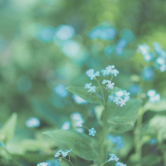 ヘリオス Bokeh 玉ボケ Flowers Old Lens オールドレンズ Helios 44-2 EyeEm Nature Lover EyeEmbestshots Showcase: May