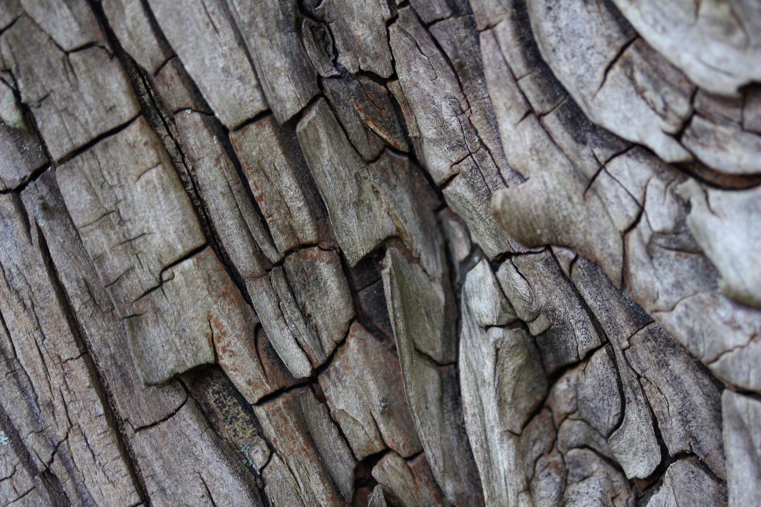 textured, full frame, backgrounds, pattern, rough, cracked, natural pattern, close-up, wood - material, detail, high angle view, wood, day, nature, no people, outdoors, weathered, brown, bark, sunlight