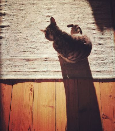 Sunlight One Animal Domestic Animals Animal Themes Shadow Lifestyles Pets Indoors  Cat Rug EyeEmNewHere Live For The Story Pet Portraits Visual Creativity
