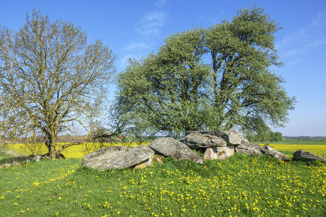 Passage grave on a hill in rural summer landscape Ancient Country Grave Stone Age Ancient Civilization Beauty In Nature Field Grass History Landscape Megalith Megalithic Monument Nature No People Old Passage Grave Passage Tomb Prehistoric Prehistoric Monument Rock - Object Rural Scene Scenics Summer Tree