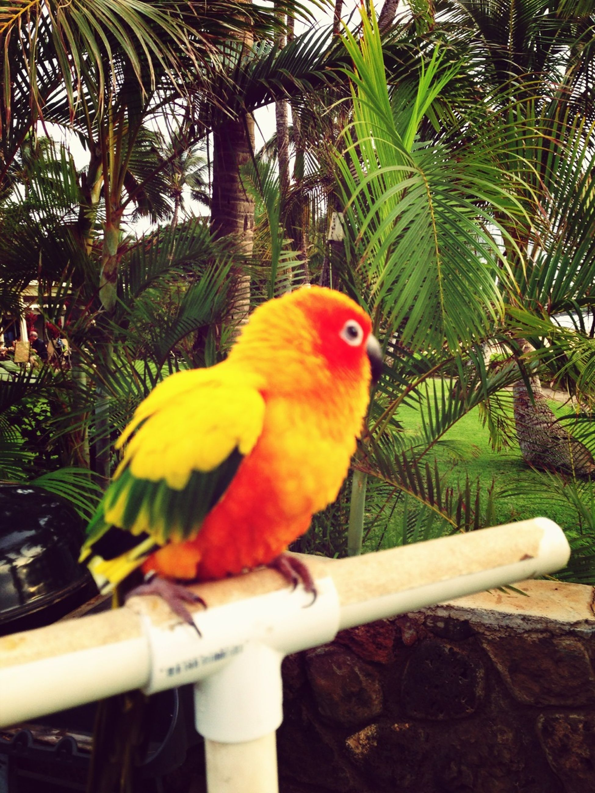 bird, animal themes, parrot, one animal, tree, animals in the wild, perching, branch, wildlife, beak, low angle view, close-up, nature, day, focus on foreground, outdoors, palm tree, cage, no people, multi colored