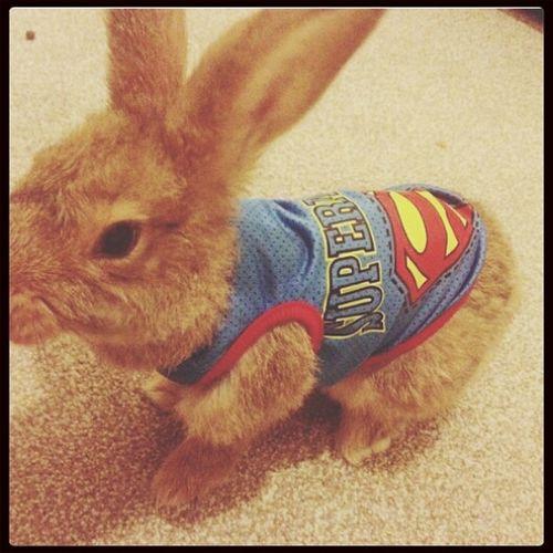 (≧∇≦)/ take my money! I want it~ Cute KAWAII Bunny  Goons