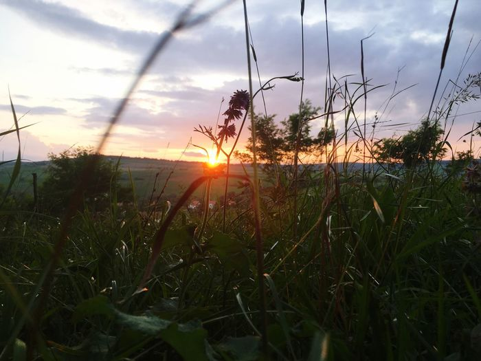 🇷🇴🇷🇴🇷🇴 Sky Plant Sunset Growth Beauty In Nature Sun