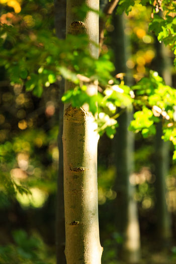 Close-up of bamboo tree trunk