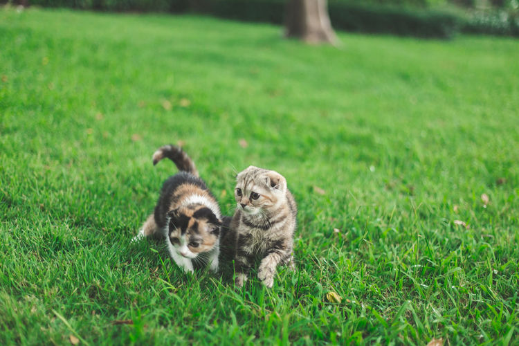 View of two cats on grass