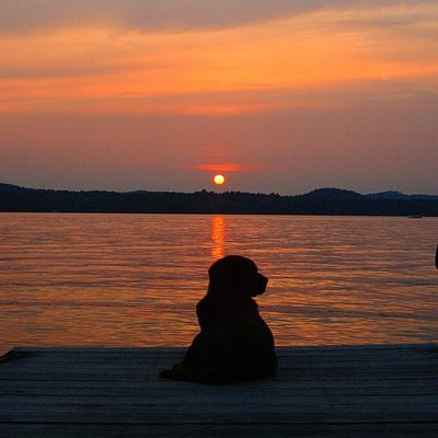 One more Sunset photo from the weekend. Barley dog enjoying the view. Lakedog Lakelife Lakewinni sunsets newhampshire labs rei1440project nature bearisland silhouette lifeisawesome