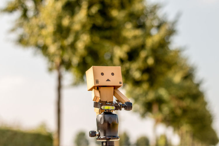 Childhood Close-up Cute Danbo Danboard Danboard_fan Danbophoto Danbophotography Day Focus On Foreground Lovely Nature No People Outdoors Tree Trypod