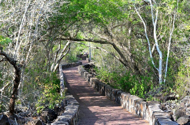 Galapagos Miles Away Way To Nowhere Nature Santa Cruz Way To Tortuga Bay Fresh On Eyeem  EyeEmNewHere Ecuador No People Look Through The Secret Spaces