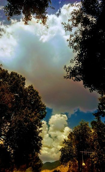 The Week On EyeEm Tree Sky Cloud - Sky Nature Low Angle View No People Forest Outdoors Beauty In Nature Tranquility Silhouette Day Scenics Growth Capture Tomorrow