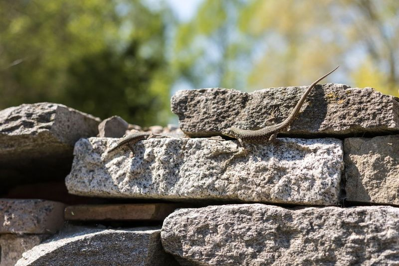 Focus On Foreground Close-up Textured  Rough Stone - Object Rock - Object Day Outdoors Stone No People Large Group Of Objects Stone Material Extreme Close Up Tranquility Lizard