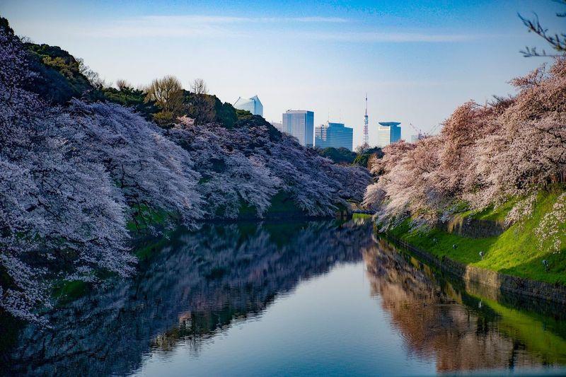 ア写カツです(*^_^*) 千鳥ヶ淵 東京タワー 桜 Chidorigafuchi Tokyo Tower Tokyo Cherry Blossoms Reflection Sky Architecture Building Exterior Water No People
