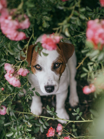 High angle view of dog with flowers