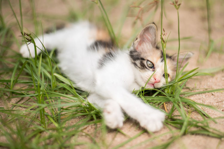 Cat resting on a field