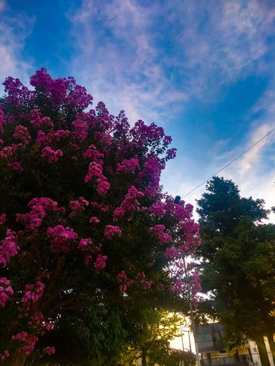 Tree Low Angle View Sky No People Outdoors Growth Nature Day Cloud - Sky Beauty In Nature Flower Fragility Colour Your Horizn