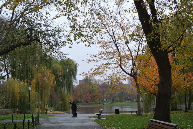 Autumn Composition Cute Couple Leading Park - Man Made Space Relaxing Moments The Way Forward Tranquility Seeing The Sights Showcase: November The Leaves Change Colors Fall Beauty The Tourist The Explorer Boston