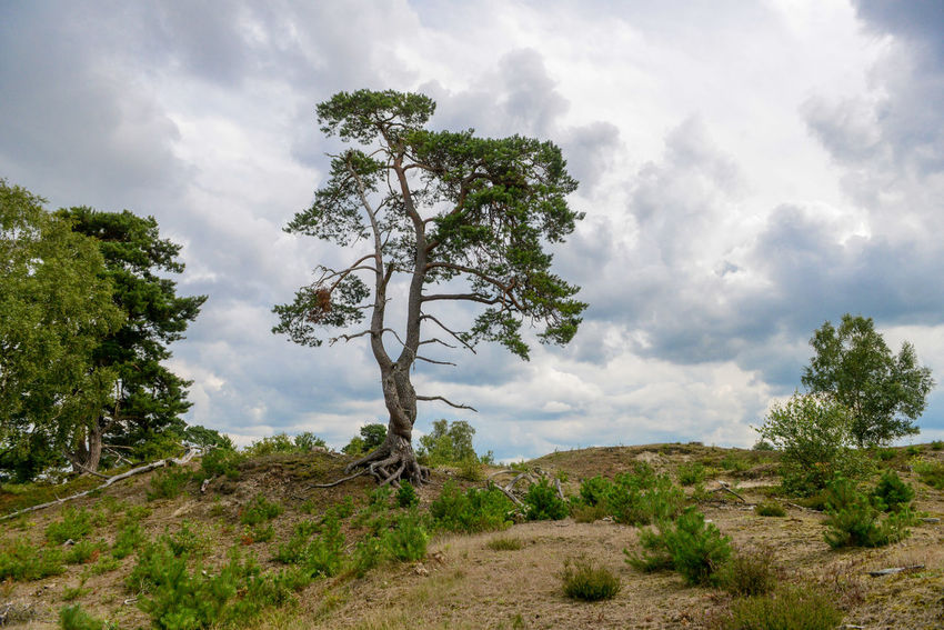 Tafelberg hiking route in Hulshorst the Netherlands Hulshorst Netherlands The Netherlands Beauty In Nature Cloud - Sky Day Hiking Trail Holland Landscape Nature No People Scenics Sky Tafelberg Tranquil Scene Tranquility Tree