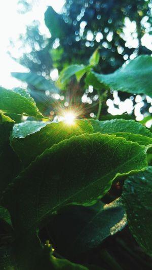 morning light Leaf Tree Leaf Water Sunlight Close-up Sky Plant Green Color Shining Sun Sunrise Sunbeam Solar Flare