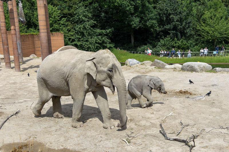 Elephant in park