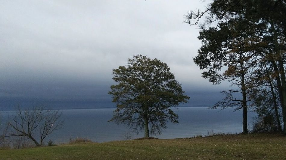 Scenics Tranquility Beauty In Nature Outdoors Lake Landscape Nature Foggy Lake With Trees Foggy Landscape Fog Over Water Fogscape Resevoir Lost In The Landscape Travel Mississippi Nature Mississippi  Natchez Trace Fishing Ross Barnett Reservoir Outdoor Photography EyeEm Best Shots - Landscape Nature_collection EyeEm Water Reflections Water_collection