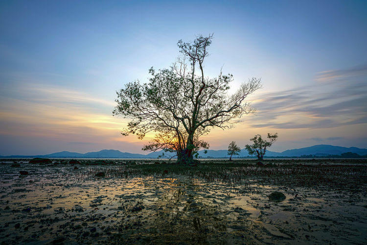 Sky Tree Scenics - Nature Tranquil Scene Sunset Tranquility Beauty In Nature Plant Land Nature Bare Tree Water Non-urban Scene Cloud - Sky No People Environment Landscape Outdoors Silhouette Isolated HDR Reflection Evening