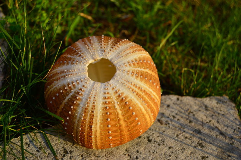 Close-up of shell on grass