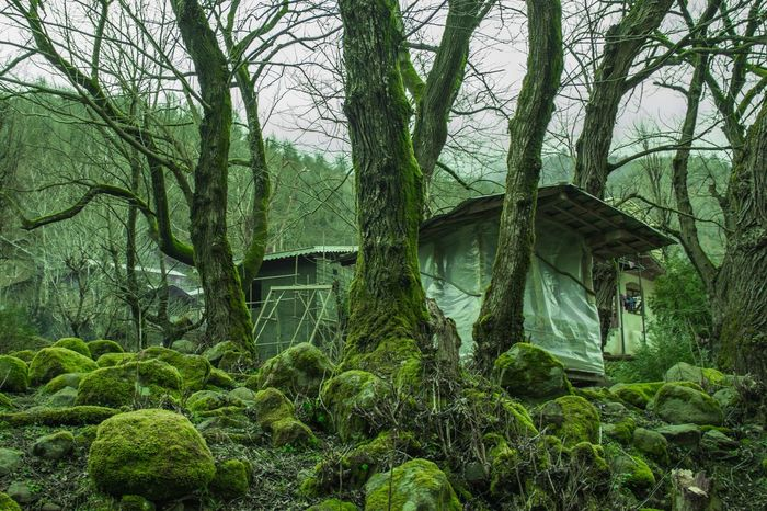 Traveling Travel Photography Travel Traveler Iran Irantravel Iranshots Gilan Rasht 700D Canon700D Green Trees