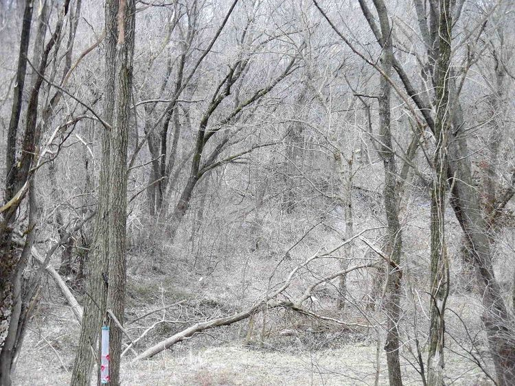 Beautiful winter in the back yard Trees Winter Samsungphotography Look! Showcase: February Ice Age Beauty In Nature No People Nature Snow Trees Tranquil Scene