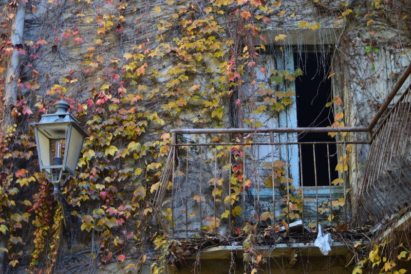 The Street Photographer - 2017 EyeEm Awards Live For The Story Amazing View Marzameni Sicily Growth Architecture Plant Built Structure Building Exterior Day Outdoors No People Ivy Leaf Nature Autumn Tree Flower