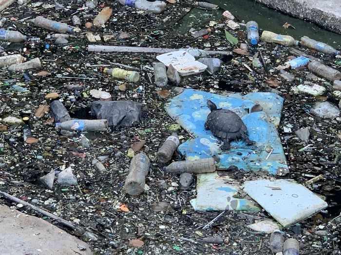 High angle view of pigeons on garbage